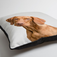 personalised pet photo piped cushion