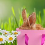 The Easter Bunny's Favourite Gifts